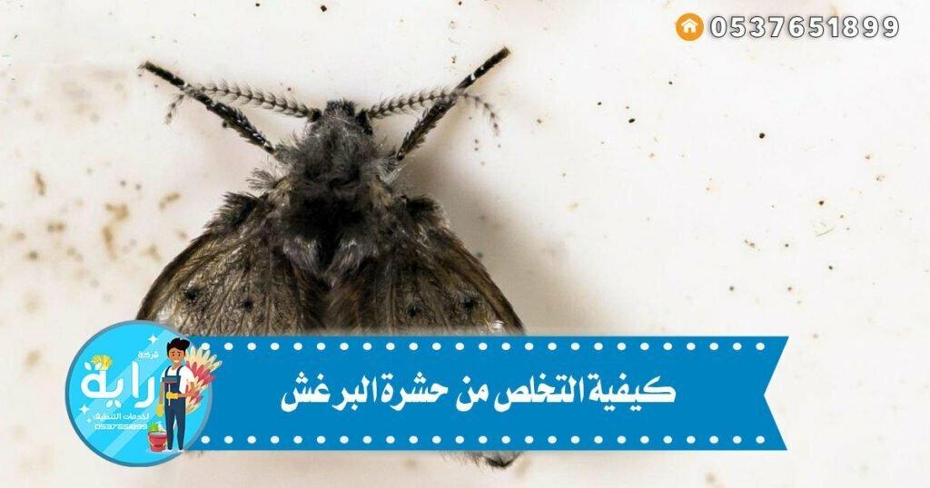 كيفية التخلص من حشرة البرغش